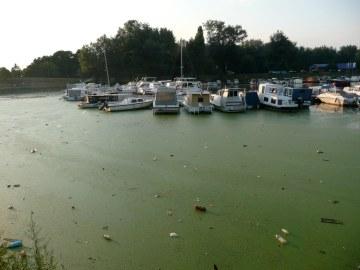 Algae boats.jpg
